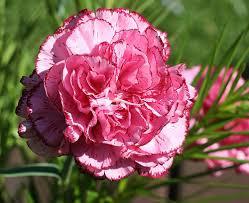شخصية الفتاة خلال الورد الذى